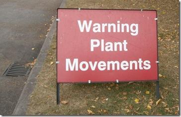 plant movements