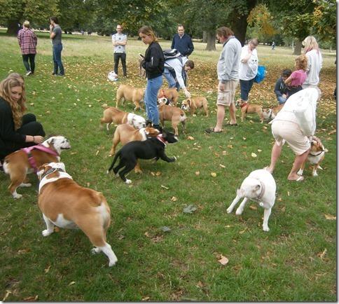 bulldog meetup