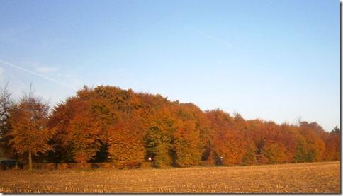 herfstpalet