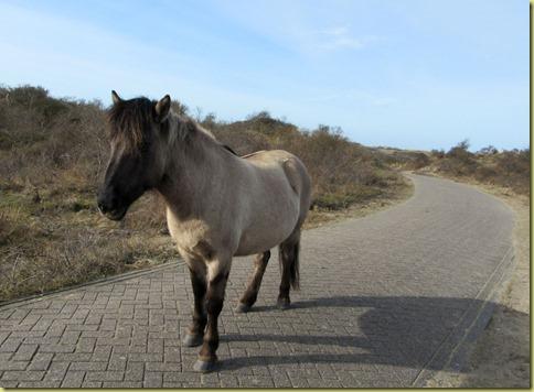 konikspaard2
