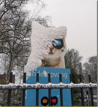 sneeuwkat