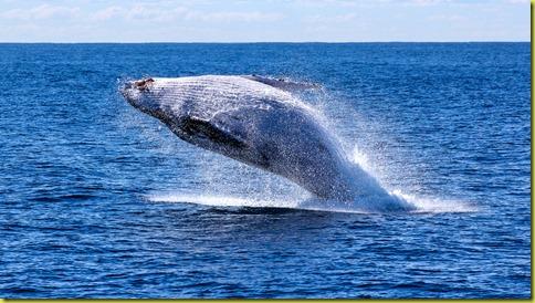 walvis-gespot-voor-zeeuwse-kust