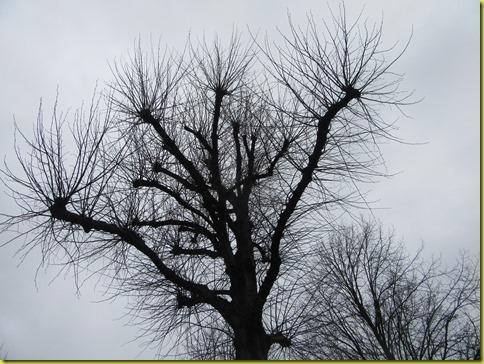 takkenboom